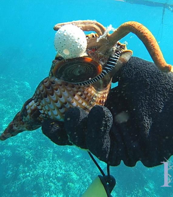 пуна кане под водой моллюски ламби ракушка охоты нырять