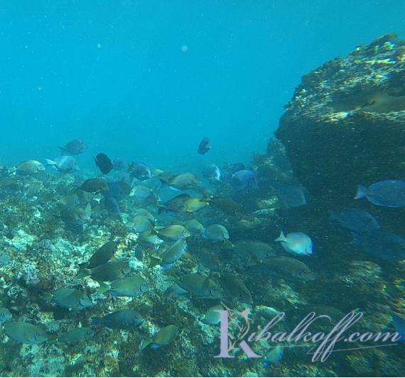 подводный риф Пунта Кане