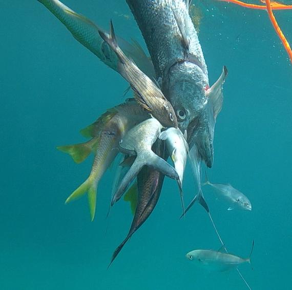 рыбы подводной охоты в пунта кане